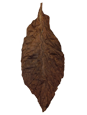 Buy Whole Leaf Cigar Wrapper Tobacco Leaves. PA Oscuro Cigar Wrapper.