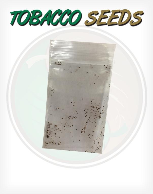Cuban Criollo Tobacco Seeds - Huge selection! Many ...