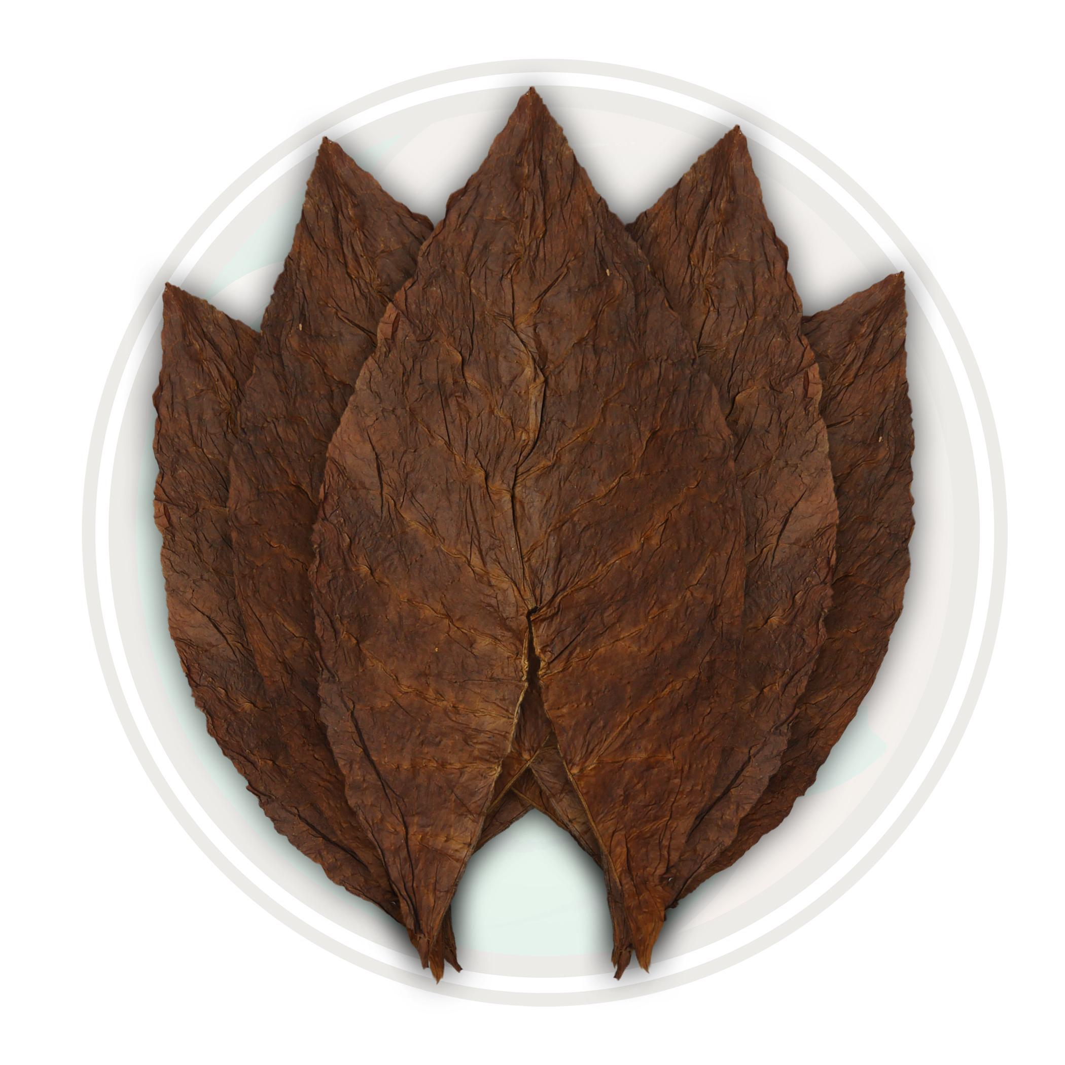 Dominican Seco Olor Cigar Filler Tobacco Leaf