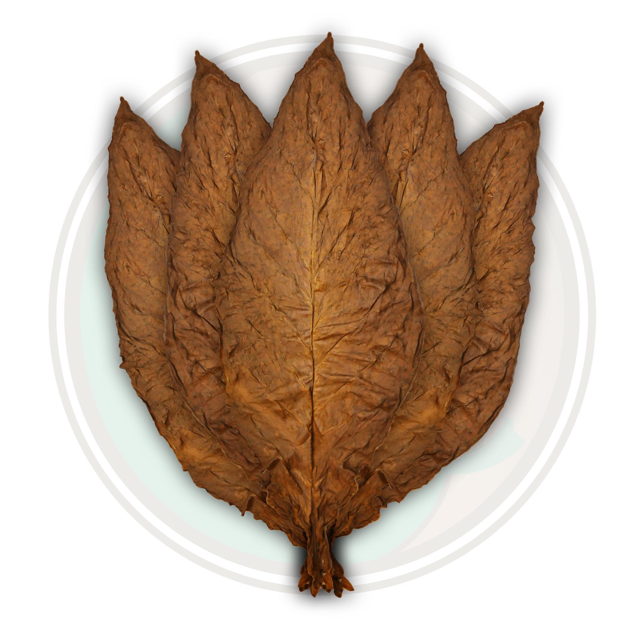 Fanta Leaves - QB-52 Fronto Wrapper Tobacco Leaves for Sale Online!