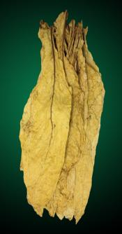 Organic Canadian Virginia Flue Cured Tobacco Leaf - USDA Organic