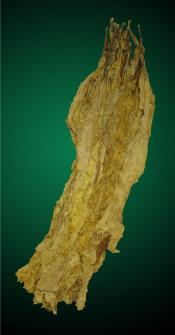 Brightleaf Virginia Flue Cured Tobacco Leaf
