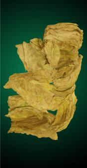 Oriental Tobacco Leaves for Cigarette Blending. Yedidge, Yenidge, Yenengy Oriental Leaf.