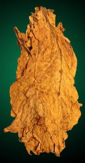 Organic American Virginia Flue Cured Tobacco Leaf - USDA Organic