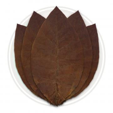 Ecuadorian Habano Ligero Cigar Wrapper Whole Tobacco Leaf