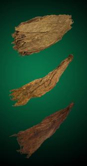 Bold Fire Combo - Large - Raw Tobacco Leaves