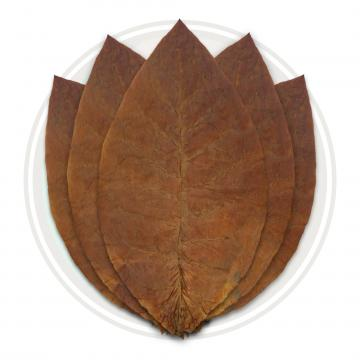 Ecuador Habano Seco Cigar Wrapper Whole Tobacco Leaf
