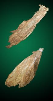 Havana Combo - Large - Raw Tobacco Leaves