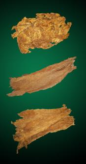 Robust American Combo - Raw Tobacco Leaves