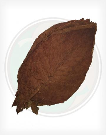 Ecuadorian Seco Cigar Filler Whole Raw Leaf Tobacco for Cigars Cigar Rolling