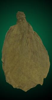 Unmanufactured Tobacco Leaf - Indonesian Bezuki Wrapper for Cigars