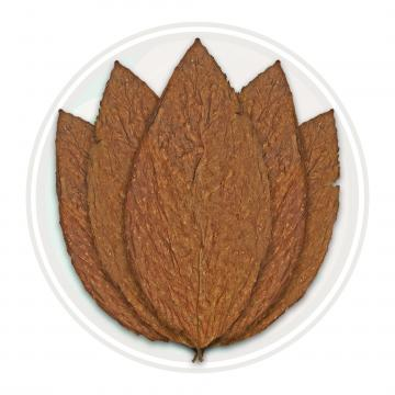 Maryland 609 Whole Tobacco Leaf Only
