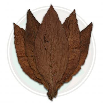 Pennsylvania Broadleaf Cigar Binder Whole Tobacco Leaf