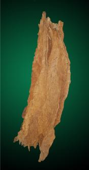 Aged Burley - Mild Tobacco Leaf for Cigarette and Pipe Tobacco Blends
