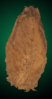 Unmanufactured Tobacco Leaf - Nicaraguan Seco Long Filler for Cigars