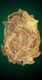 American Virginia Flue Cured - Crop Year 2012