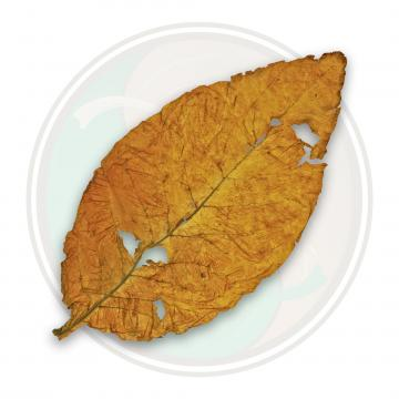 American Virginia Flue Cured Blonde Tobacco Leaf