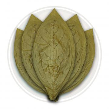 Candela Cigar Wrapper Tobacco Leaf