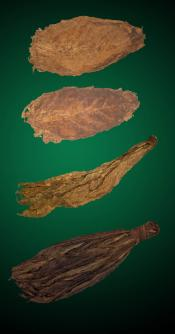 Bold Combo - Large - Raw Tobacco Leaves