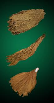 Mild Combo - Large - Raw Tobacco Leaves