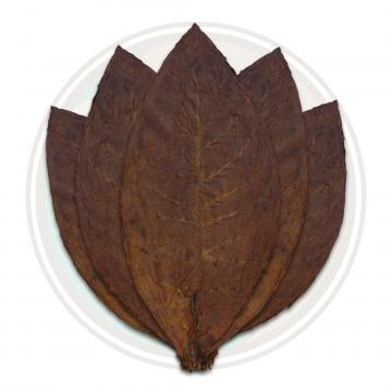 Colombian Cigar Binder Whole Tobacco Leaf