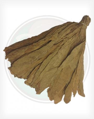 Premium Connecticut Shade Leaf 21 Inch Wrapper