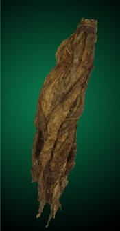 CT Fronto Tobacco Leaves, CT Tobacco Leaf, CT Fronto, Fronto