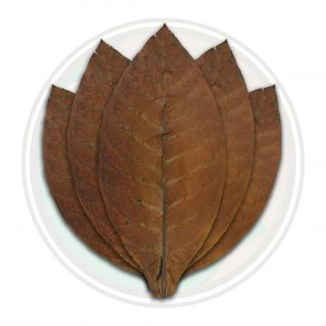 Dominican Cigar Binder Tobacco Leaf Only