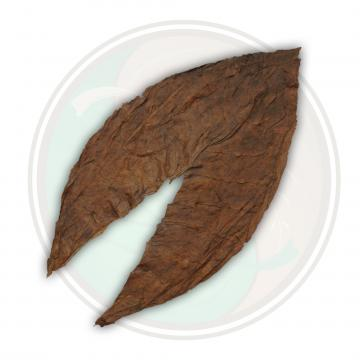 Dominican Seco Criollo '98 Cigar Filler Tobacco Leaf