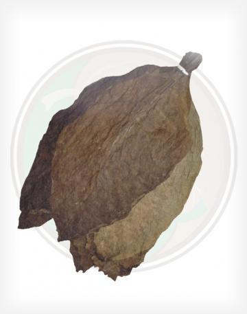 Dominican Cigar Binder Whole Raw Leaf Tobacco