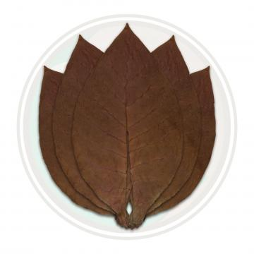 Ecuadorian Habano Viso Cigar Filler Tobacco Leaf Only