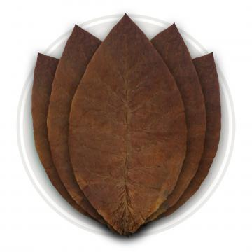 Ecuadorian Habano Ligero Cigar Wrapper Tobacco Leaf Only
