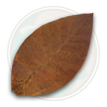 Ecuadorian Habano Seco Cigar Wrapper Tobacco Leaf Only