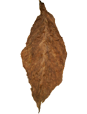 Whole leaf cigar wrapper, tobacco leaves for sale, medium tobacco leaf unfolded