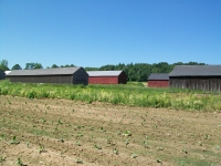 Tobacco Curing Barns, Curing Tobacco, CT Tobacco Curing