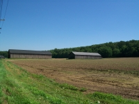 Whole Leaf Tobacco Farm